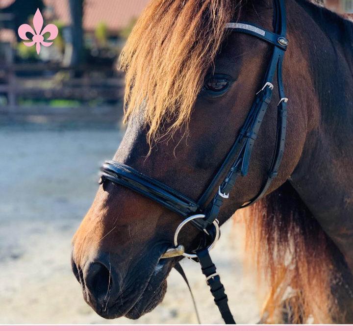Warum pferdegestütztes Coaching?